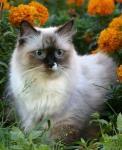 Глория Синеглазый Ангел (фото)