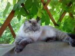 Алиса (фото)