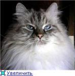 Василиса Прекрасная Сибирский Самоцвет (фото)