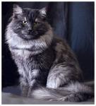Захар Сиберия (фото)