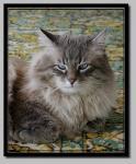 Оникс Голубой Жемчуг (фото)