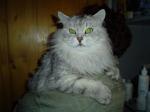 Фенист русский царь Сибирских лесов (фото)