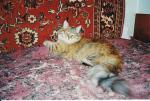 Yagellona Королева Сибирский Престиж (фото)