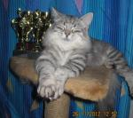 Злато-Серебро Табелис (фото)