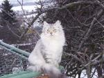 Диана Майя Зачарованные кошки (фото)