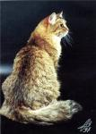 Царевна Цецилия Селигер (фото)