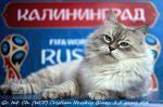 Кристиан Невский Блюз (фото)
