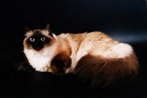 Зульфия Ману (фото)