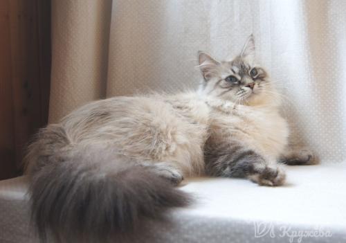 Герда Серджет (фото)