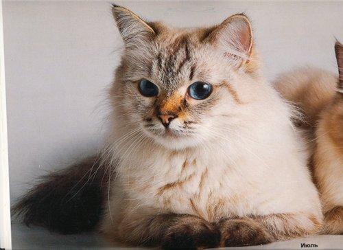 Ева из Сибирского Чуда (фото)