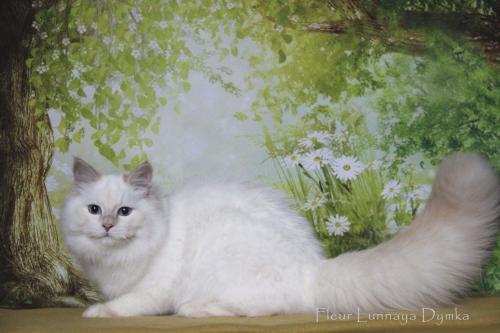 Fleur Lunnaya Dymka (фото)
