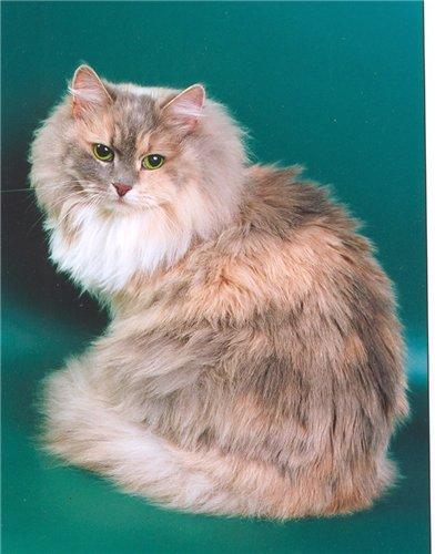 Бетси Чинги-Тура (фото)