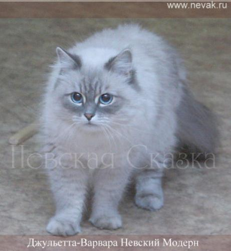 Джульетта-Варвара Невский Модерн (фото)