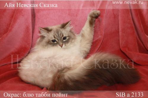 Айя Невская Сказка (фото)