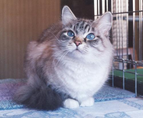 Елизара (фото)