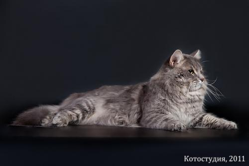 Пимен-Люринат Фиалка (фото)