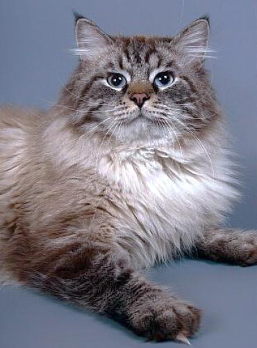 Харлей Сибирский Самоцвет (фото)