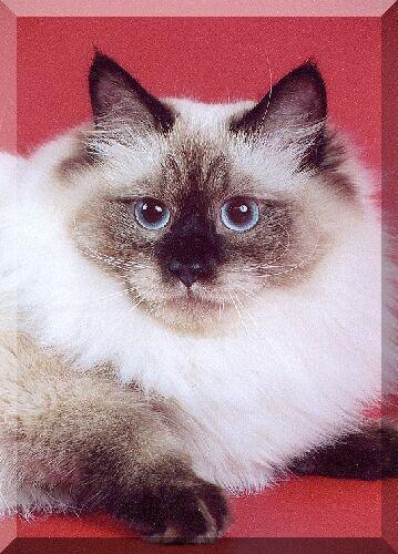 Виктория Сибирский Самоцвет (фото)