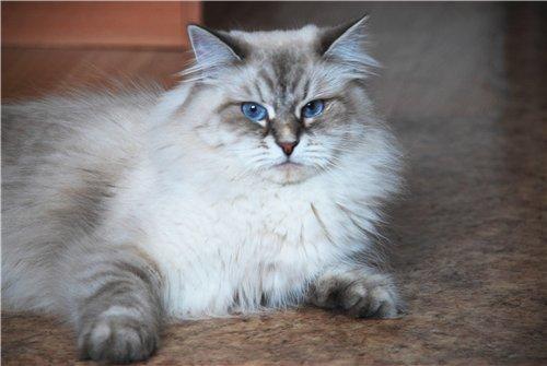 Рената Сибирский самоцвет (фото)