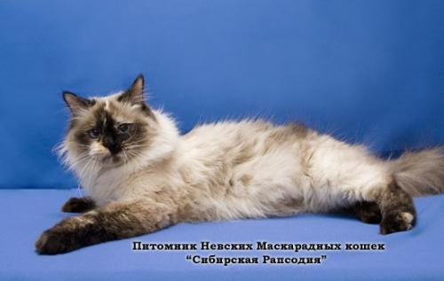 Анжела Сибирская Рапсодия (фото)