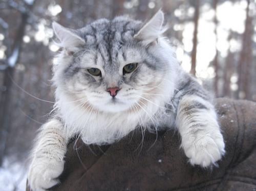 Добрыня Сибирское Княжество (фото)
