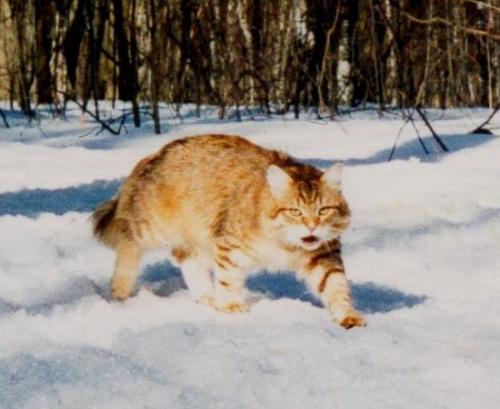 Кузьма Литвик (фото)