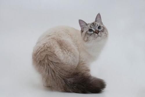Фантина Богира-Данвел (фото)
