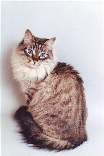 Зея Сибиряк (фото)
