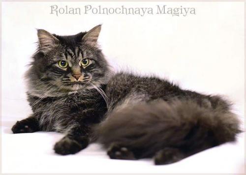 Ролан Полночная Магия (фото)