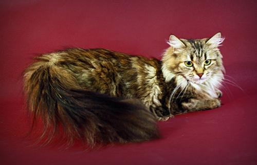 Darina Brusnichka from Empires Cat (фото)