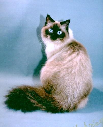 Тилли-Лапушка из Империи Кэт (фото)