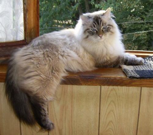 Zateynik Vilyam from Empires Cat (фото)