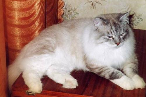 Мурчелло Ирбис (фото)