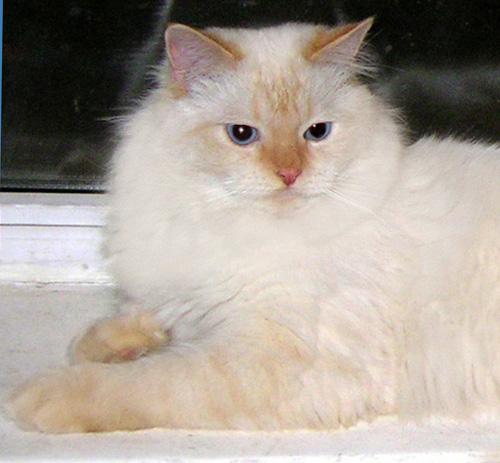 Епифан Жемчуг Невы (фото)