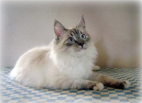 Элиссия (фото)