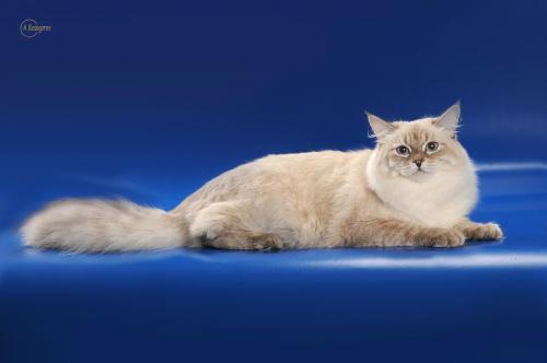 Айсия Чары Невы (фото)