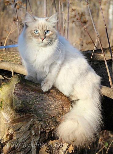 Astreya Iz Tverskogo Knyazhestva (фото)