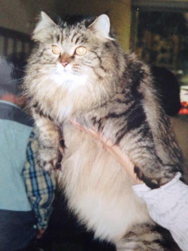 Ричардита (фото)