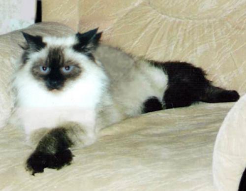 Бейси (фото)