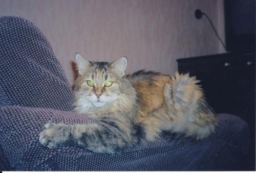 Тирса Чароит (фото)
