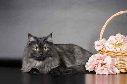 Устиния из Барских кошек (фото)