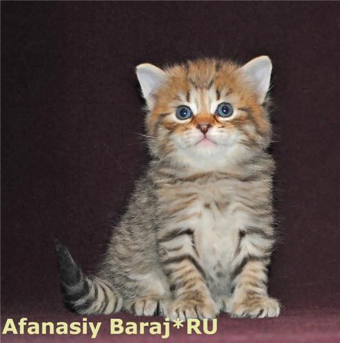 Афанасий Baraj*RU (фото)