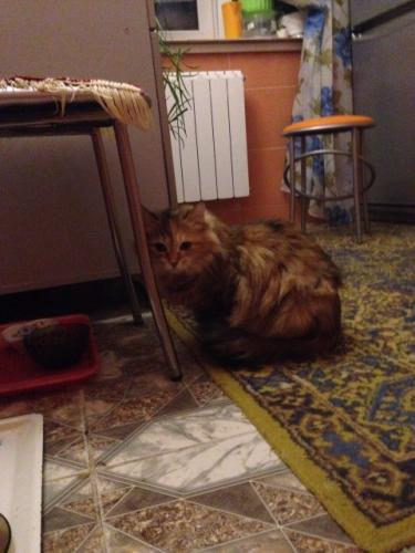 Мелита-Медовая (фото)
