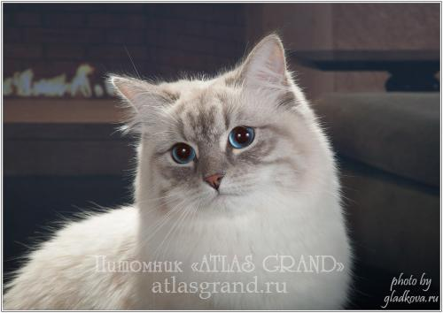 Изюминка Снежная Зима of ATLAS GRAND (фото)