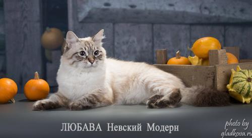 Любава Невский Модерн (фото)