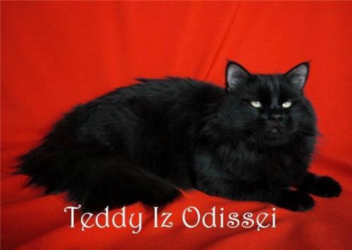 Тедди Из Одиссеи (фото)