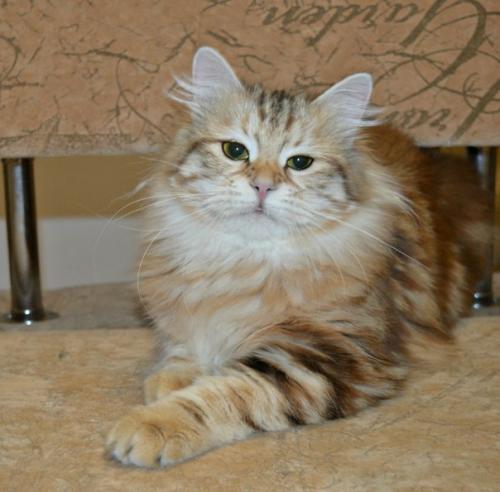 Тагира (фото)