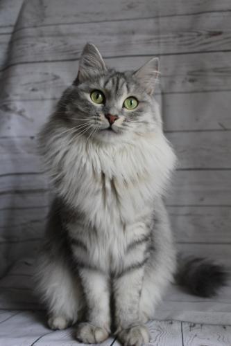 Ляля (фото)