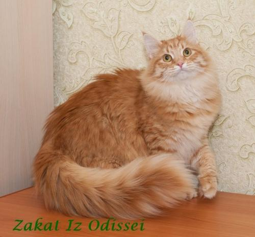 Закат Из Одиссеи (фото)
