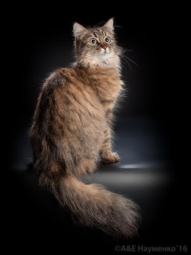Ланесса Бриллиантовый Охотник (фото)